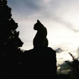 carlos cat